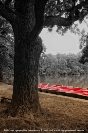 The red boats